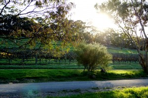Photo taken by visitors Lyndal and Damien Zobels, Adelaide Hills while on a recent visit to the Clare Valley.